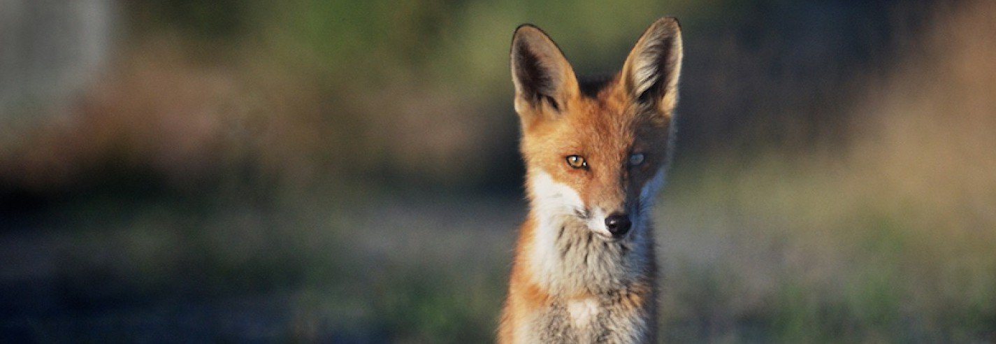 A Vixen's Journey to Life